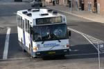 Papuga Bus 45