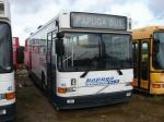 Papuga Bus 43